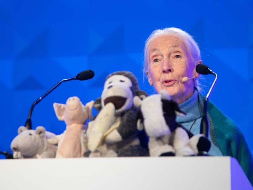 jane goodall speaking at the international conference